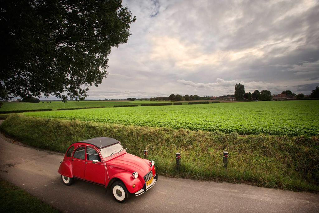 Eend-op-landweg-Limburg